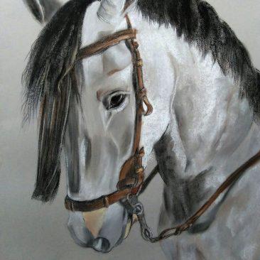 ILUSTRACIÓN – Retrato caballo